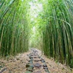 Несколько интересных фактов о бамбуке